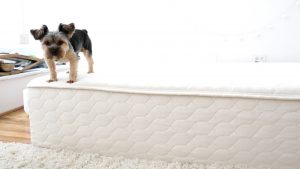 Winkbeds Ecocloud Mattress Review, Ecocloud mattress review, Eco cloud mattress, ecocloud mattress, ecocloud9
